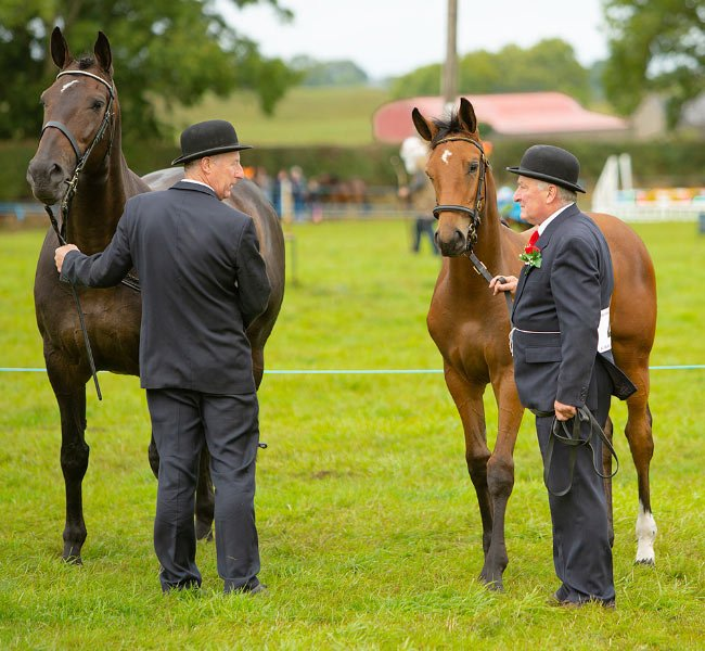 moate agricultural show